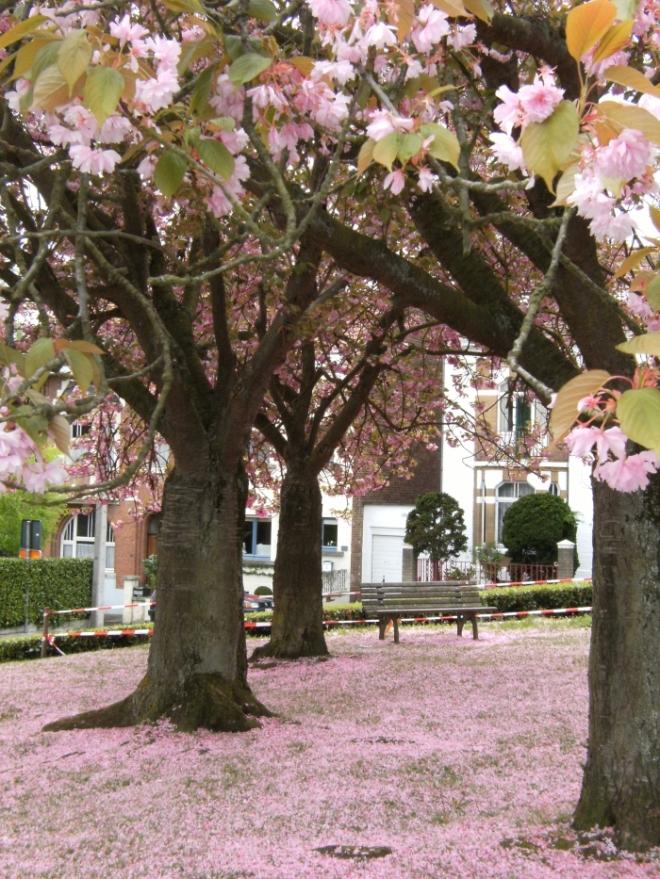 rixensart,arbres remarquables disparus