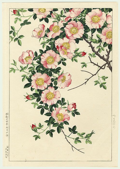 Japanese Wood block print, Wild Rose Vine après 1930 by Nishimura Hodo