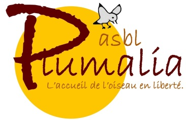 Logo Plumalia 2014b