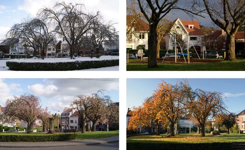 2 Montage Cerisiers du Japon Place Verte © Monique D'haeyere