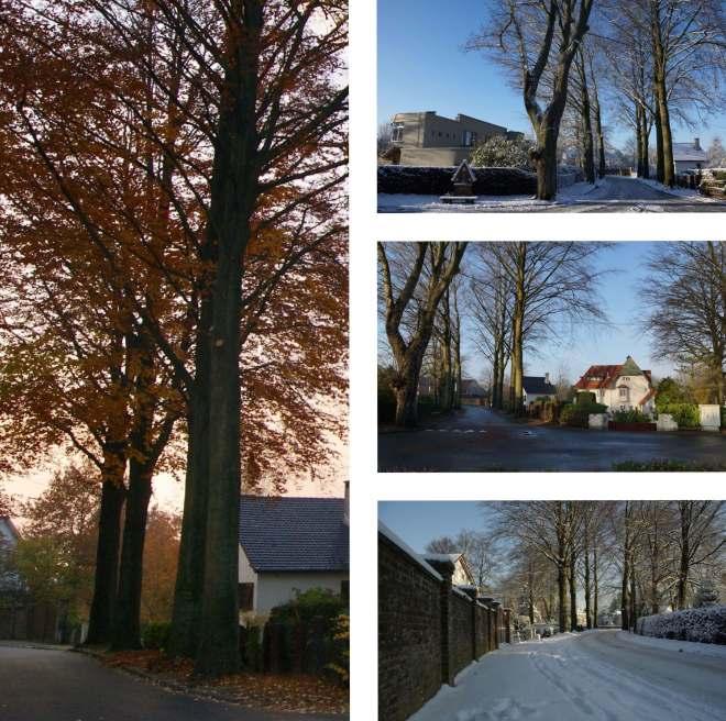 Six hêtres communs avenue de Montalembert Rixensart montage (1)