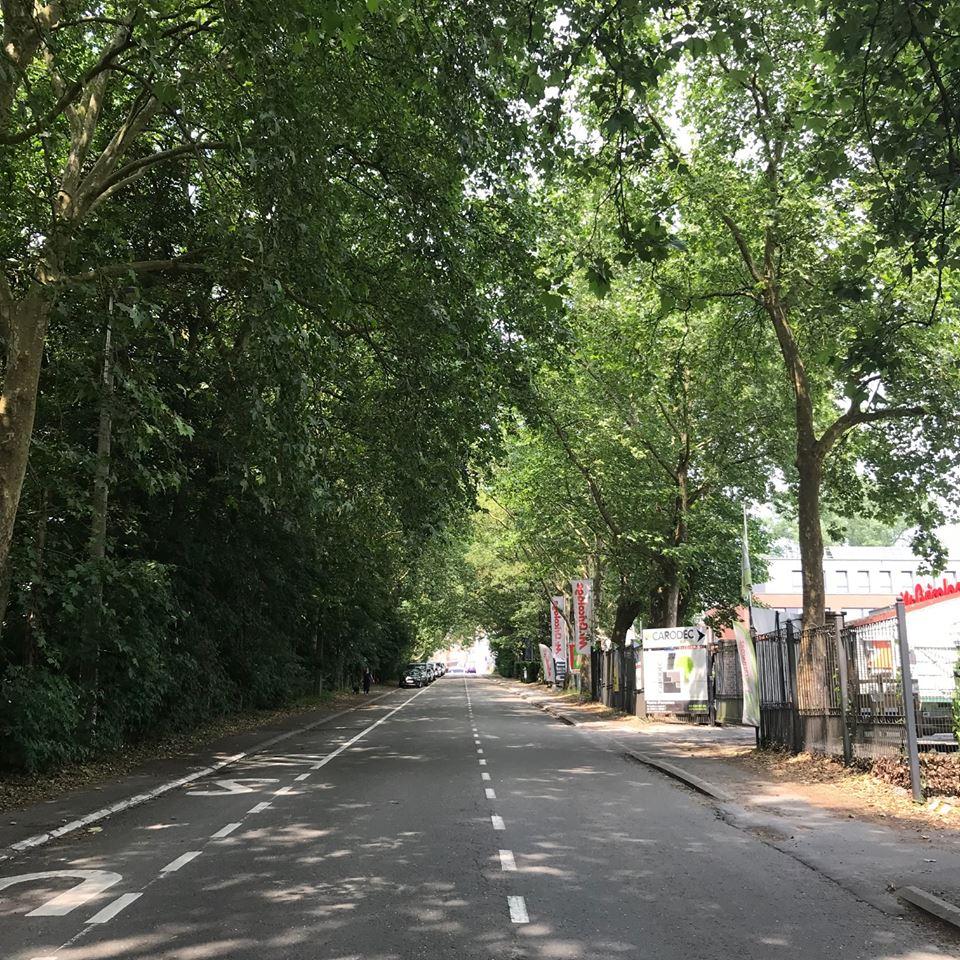 Avenue Albert Ier 52 Platanes communs remarquables 6.2018 © Bruno Van Steenweghe
