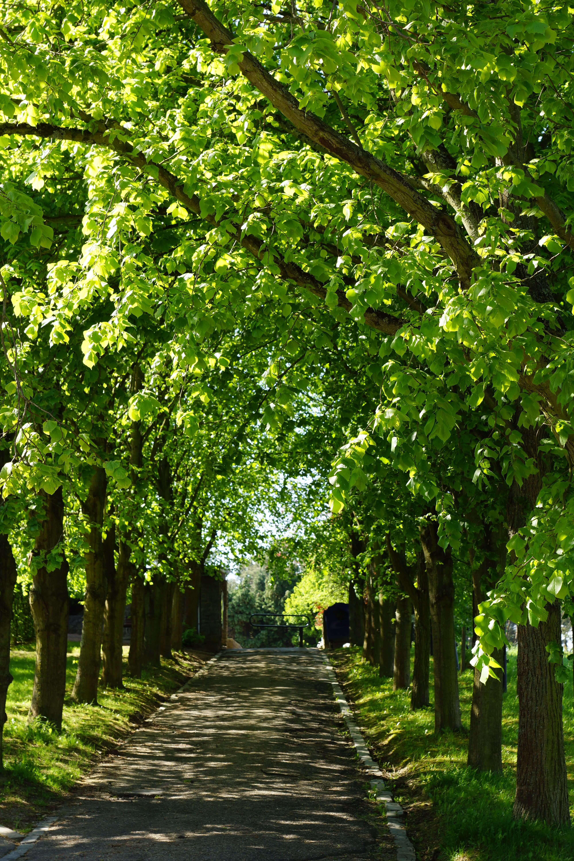 Cimetière de Rosières 5.2012 © Eric de Séjournet.2012 © Eric de Séjournet-003 (1)