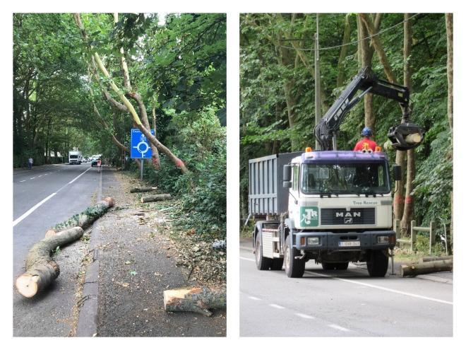 20180713 Avenue Albert Ier abattage d'arbres montages photos