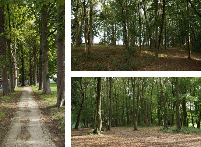 Bois communal des Charmettes 8.2018 montage © Eric de Séjourent