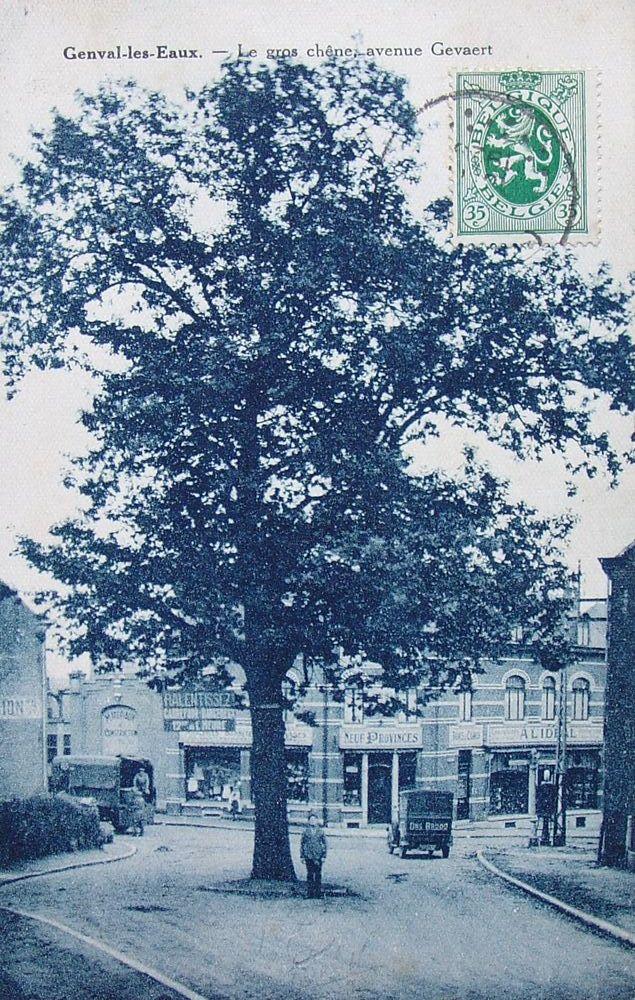55. Le gros chêne - avenue Gevaert Collection Phlippe Godin