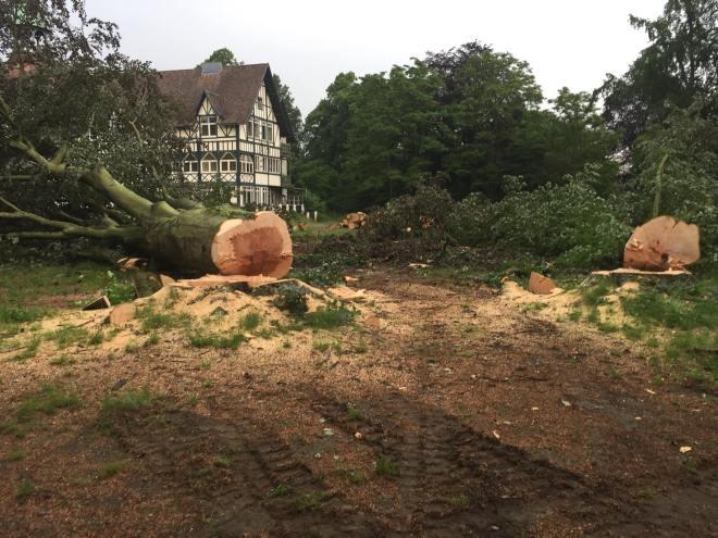 Résidence du Lac Parc de Genval Avenue Herbert Hoover abattage 42 arbres 31.3.2017 © Monique D'haeyere