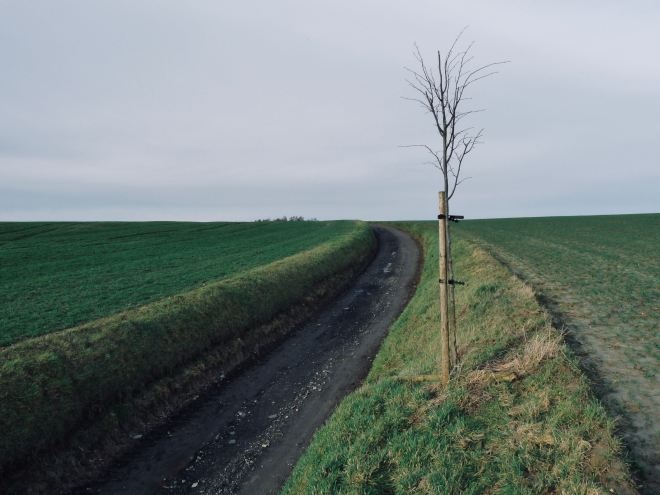 Chemin du Tilleul