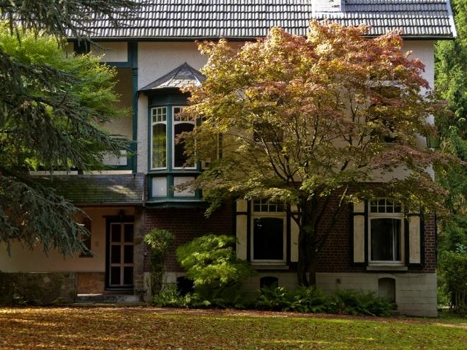 Érable palmé ou Érable japonais lisse Avenue de Montalembert 10. 2013 © Cedric Muscat