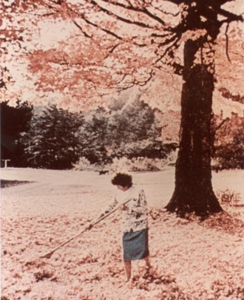 Jeu de l'arbre mystère