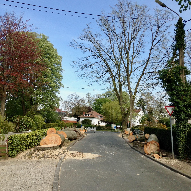 PAD Hêtres pourpres avenue de Montalembert 16.4.2020 © Eric de Séjournet 11